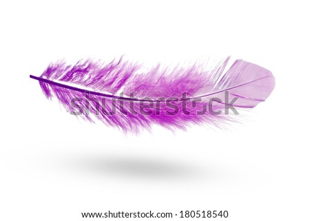 Violet feather on the white background