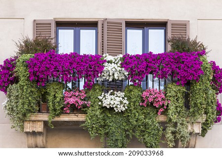 Arbustos lilas persas | Comprar Purple Flowering Shrubs