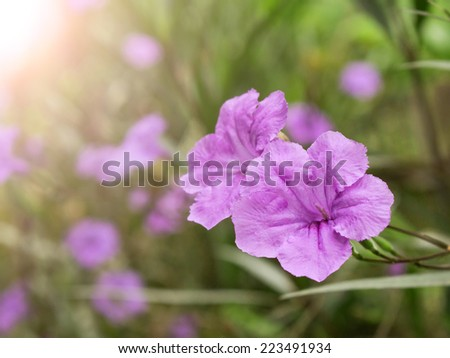 violet flower spring time with sunlight morning background - stock photo