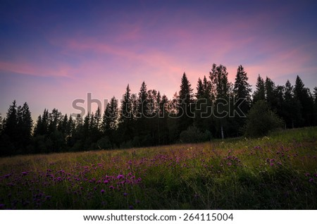 violet flowers and violet sky on sunset - stock photo