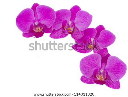 violet  flowers of orchid frame  isolated on white background - stock photo