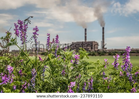 violet flowers on a meadow with ironworks on background - stock photo