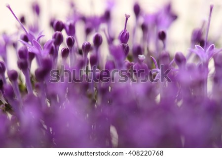 Violet flowers  on blurred background with  boke