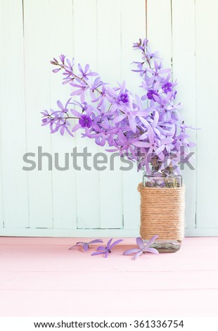 violet flowers on soft background