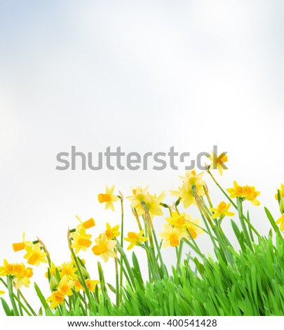 violet hyacinth blooming flowers border isolated on white background