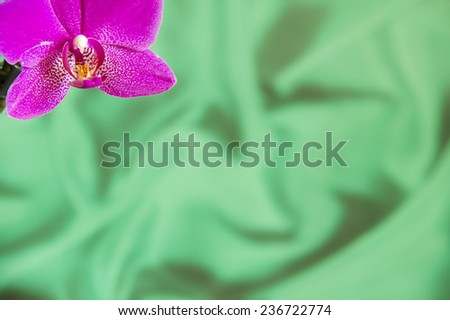 Violet Orchid Flowers on green sateen background with copyspace  - stock photo