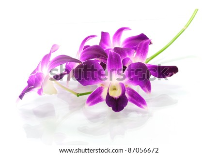 Violet orchid isolated on white background - stock photo