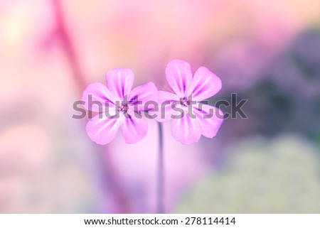 Violet wildflowers on a bright blurry background - stock photo
