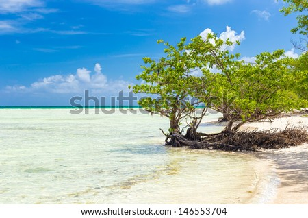 Virgin beach with calm turquoise water in Cuba - stock photo