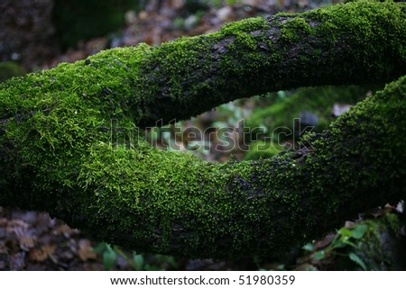 Virgin Forest- mossy tree closeup - stock photo