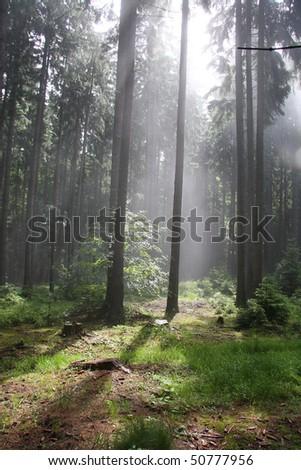 Virgin Forrest - stock photo