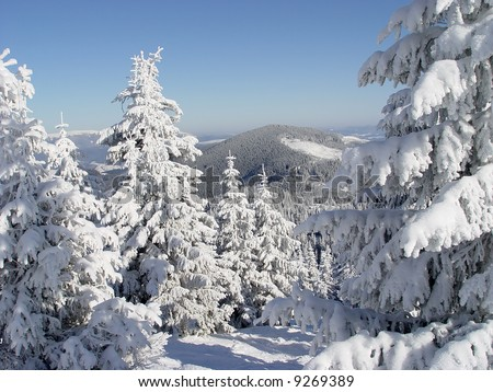 virgin winter forest in the mountains