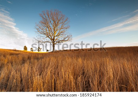 Virginia Grassland Lone Tree Winter Landscape at Manassas National Battlefield Park - stock photo