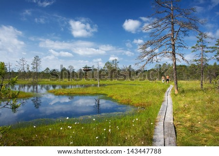 Viru bogs at Lahemaa national park - stock photo