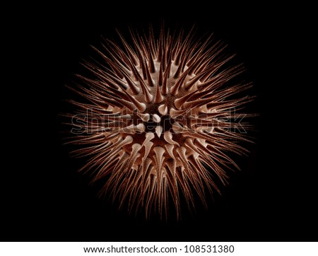 Virus cell isolated on black background - stock photo