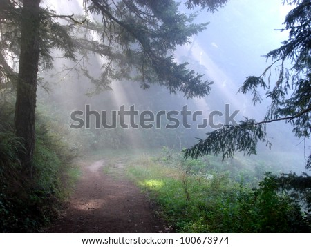 Visitor from above, or light beams in mist (California, USA) - stock photo