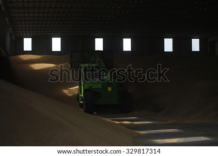 VITERBO, ITALY - 25 JULY 2014: A bulldozer moves freshly-harvested wheat grain from the storage area to off-load them into grain Silobags on a farm in Viterbo.