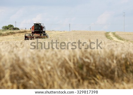 VITERBO, ITALY - 25 JULY 2014: A combine harvester moving across a field of durum wheat as it cuts the summer harvest in Viterbo.