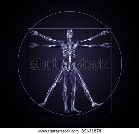 Vitruvian Man - stock photo
