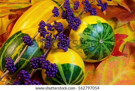 Vivid autumn colors are illustrated by fallen leaves, colorful gourds, and Callicarpa berries. - stock photo