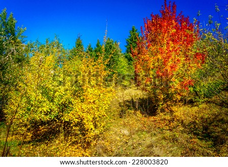 Vivid autumnal colorful landscape.