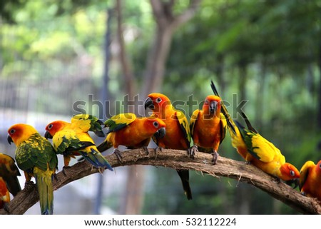 vivid birds on timber with soft focus nature background