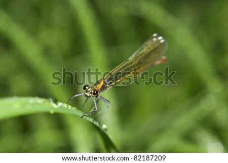 Vivid dragonfly while hunting in the morning. Shallow depth of field. - stock photo
