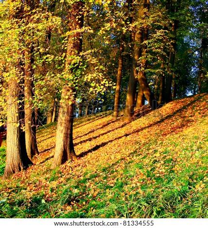 vivid forest hillock - stock photo