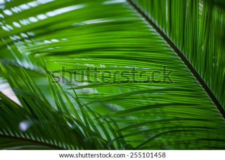 Vivid green palm leaves closeup. - stock photo