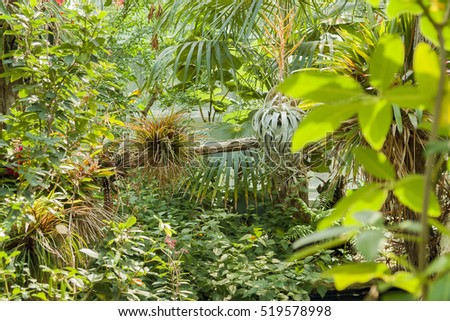 vivid scenery including lots of various jungle plants