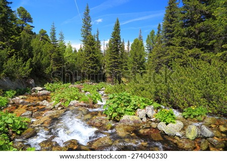 Vivid vegetation and pine tree forest along rapid river on the mountain - stock photo