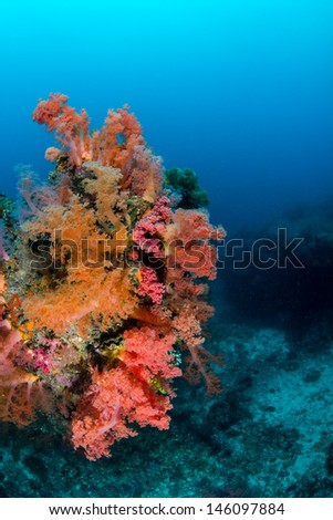 Vividly colored soft corals growing on a tropical coral reef - stock photo