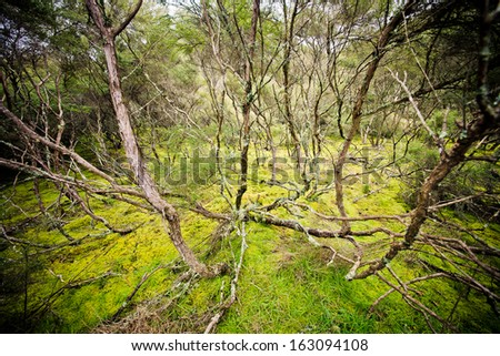 Volcanic Forest Trees, New Zealand - stock photo