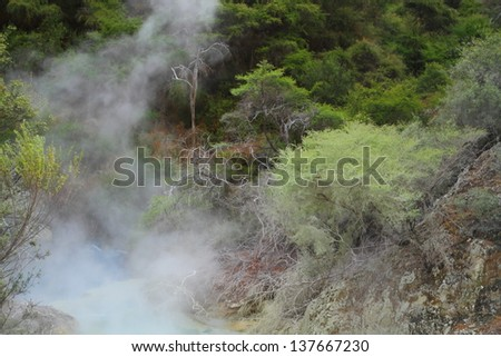 Volcanic landscape with hot springs and exotic plants in Rotorua, New Zealand - stock photo