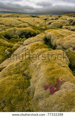 Volcanic lava covered by moss, Iceland - stock photo