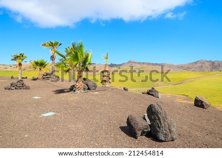 Volcanic rocks and palm trees on a golf course in Las Playitas town, Fuerteventura, Canary Islands, Spain  - stock photo