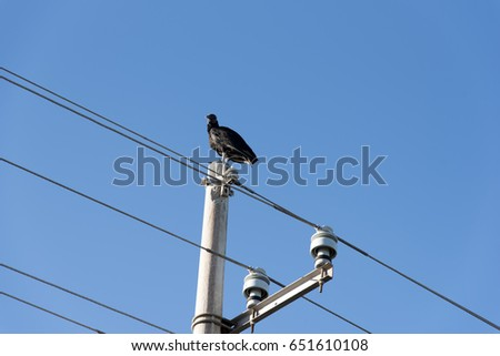 Vulture sitting on a mast