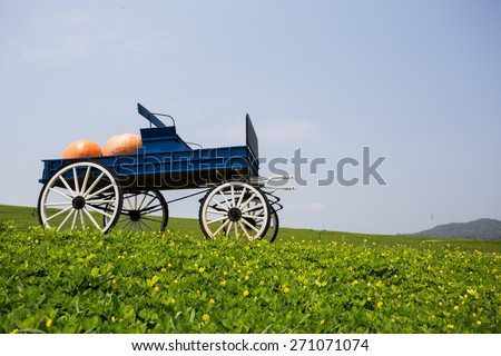 wagon full of pumpkins in farm