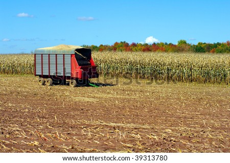 Wagon used for harvesting in field of corn for cattle and ethanol - stock photo