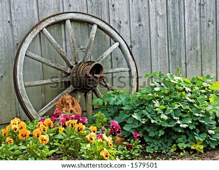 Wagon Wheel in Garden - stock photo