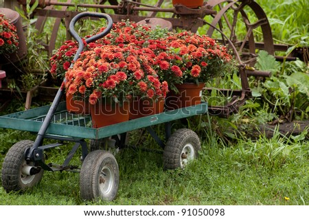 Wagon with mums