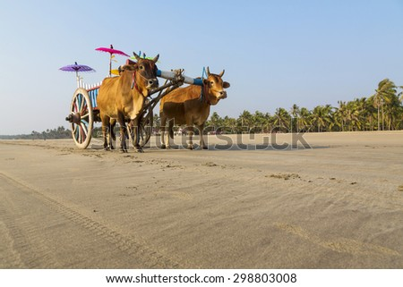 Wagon with oxen on the beach - stock photo