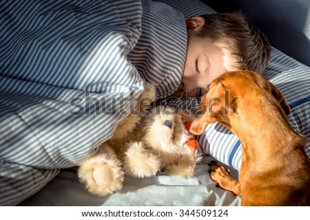 Wake up call. Dog(dachund) wakes up the sleeping boy. - stock photo