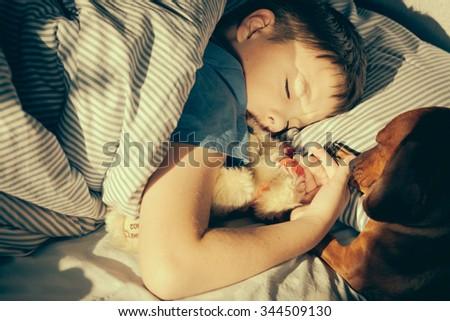 Wake up call. Dog(dachund) wakes up the sleeping boy. - stock photo