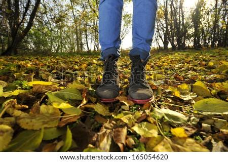Walk across a carpet of autumn leaves. - stock photo