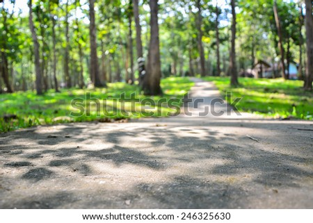Walk in the park Filled with shade trees. - stock photo