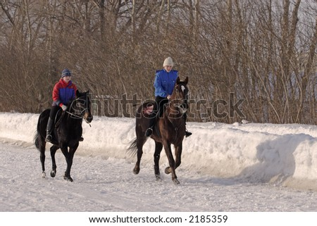 Walk on horses in the winter - stock photo