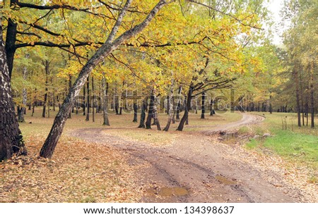Walk through the beautiful, fabulous, autumn forest