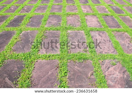Walk way in the garden, Stone path - stock photo