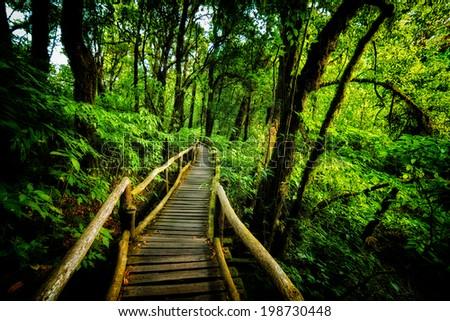 walk way into rain forest inthanon mountain, chiang mai thailand - stock photo